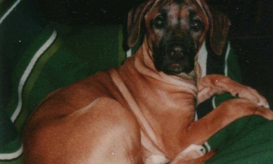 Aiya as puppy