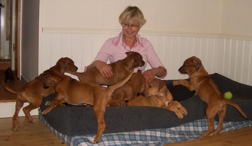 Puppies 2008